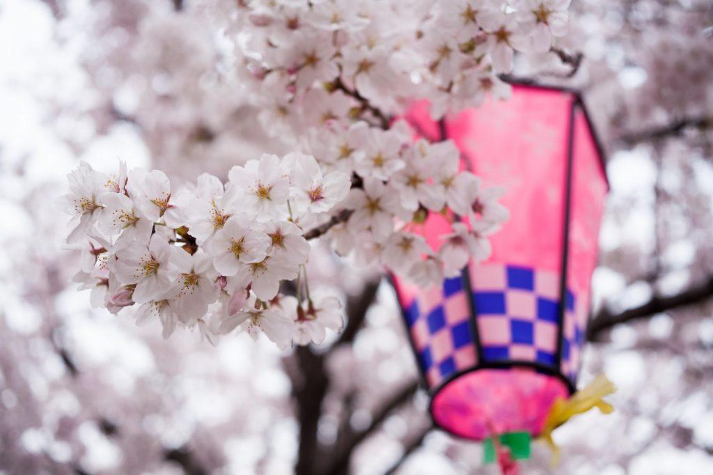 六高台 六実 桜まつり