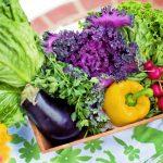 ハーフ野菜とは何?通販で購入できる?新種の野菜をまとめ!