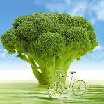 はなっこりーの旬の時期や栄養価は?種や苗から栽培は簡単?
