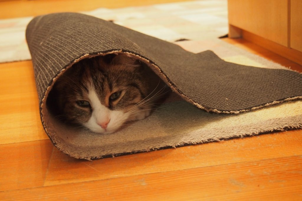 猫-カーペット-マット