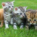 ブルボンヌの逮捕は嘘?愛猫がかわいい?身長や年齢、彼氏は?