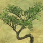 盆栽たいそうが香川県高松市から世界に?ボンクラの女の子も調査!
