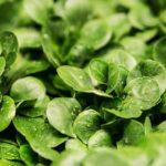 工場野菜のデメリットやメリットとは?栄養価や種類・味はどう?
